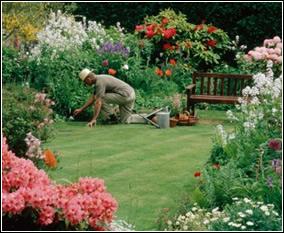Jardiner a f cil consejos para la decoraci n del jard n for Estudiar jardineria