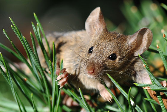 Jardiner a f cil rodenticidas o raticidas blog de for Ahuyentar ratas jardin