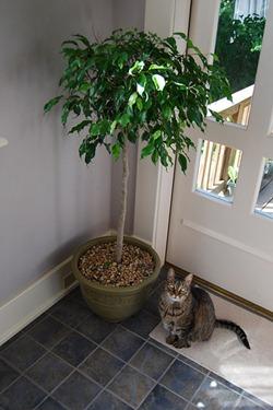 jardiner a f cil plantas de interior lindas blog de On arbustos de interior