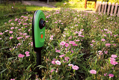 Cámara de vídeo para grabar en time-lapse las flores del jardín