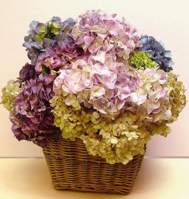 Cómo secar las hortensias para obtener flores secas para arreglos florales