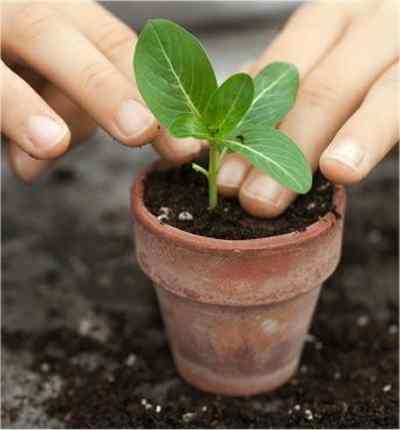 jardiner a f cil ltimos consejos para cultivar en