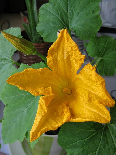 planta amarilla Principales cuidados de plantas con hojas amarillentas