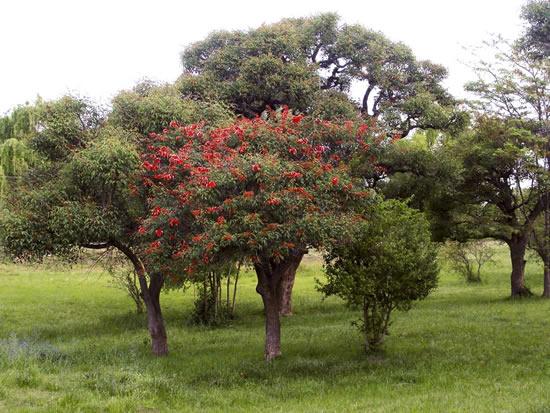 Jardiner a f cil rboles con flores el ceibo blog de for Arboles jardineria