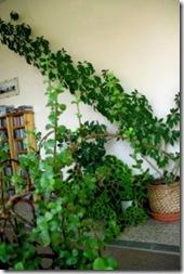 cuidado-de-plantas-suculentas