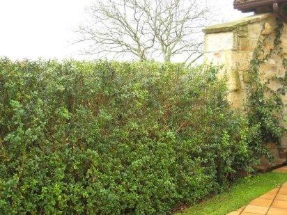 Jardiner a f cil los setos los protectores del jard n for Planta ornamental que se reproduzca por esquejes