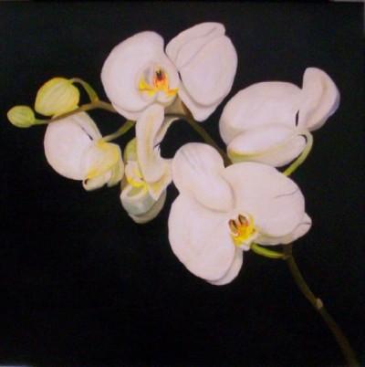 Plantas de Interior con flor la Orquídea3