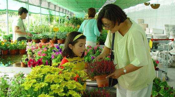 Jardiner a f cil flores y plantas en madrid blog de for Centros de jardineria en madrid