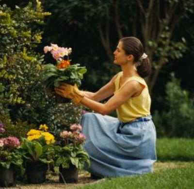 jardineria consejos para principiantes