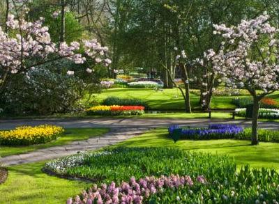 Jardiner a f cil primeros pasos para dise ar un jard n for Disenar jardines