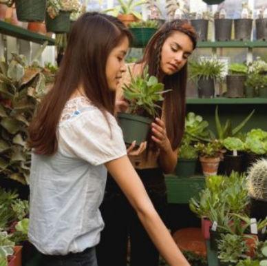 se puede ahorrar dinero al comprar plantas
