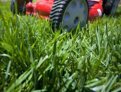 Jardiner a f cil cuidados del c sped del jard n blog de for Cuidados del jardin