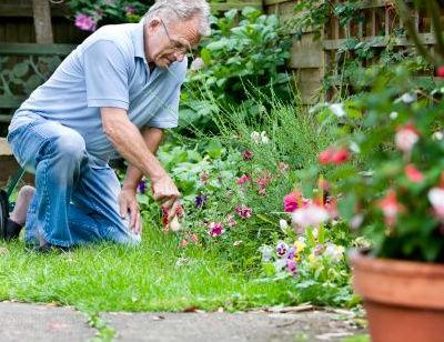 Disenar un jardin lleno de flores
