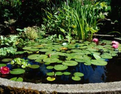 plantas para estanques de jardn has pensado en la posibilidad de incorporar un estanque en tu jardn no es un proyecto utpico ni tan difcil de