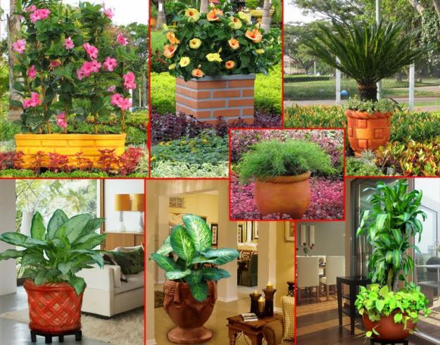 como aprender jardineria dise os arquitect nicos