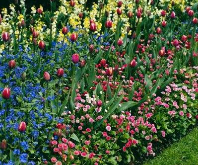Consejos para mantener un bello jardin