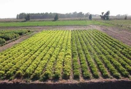 Image result for cultivo planta