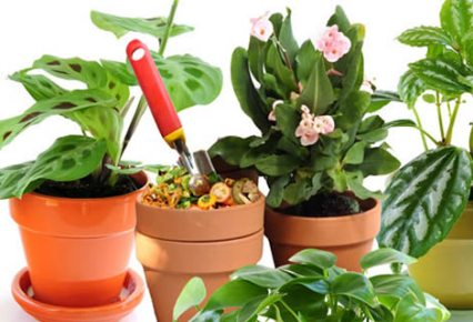 Jardiner a f cil c mo elegir las mejores plantas para - Plantas aromaticas en maceta ...