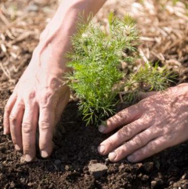 consejos para crear un huerto organico