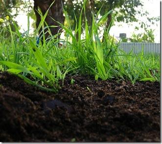jardineria-ecologica