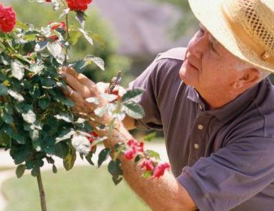 ultimos cuidados de rosales en primavera