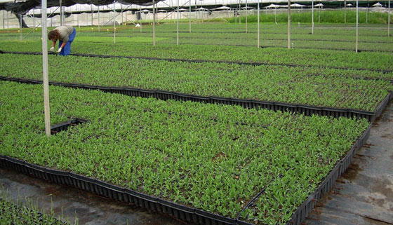 Producciones de plantas programadas