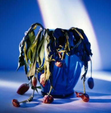Pudricion de raices en las plantas