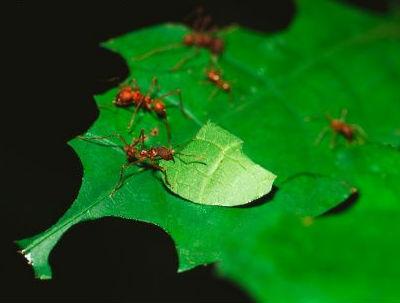 controlar hormigas en verano en tu jardin