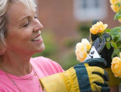 cuidado de rosales en verano consejos para rosales en verano