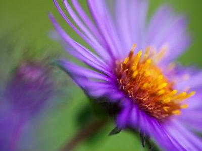 flores de verano jardin de verano