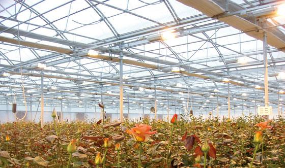 Control climático en invernaderos de rosas