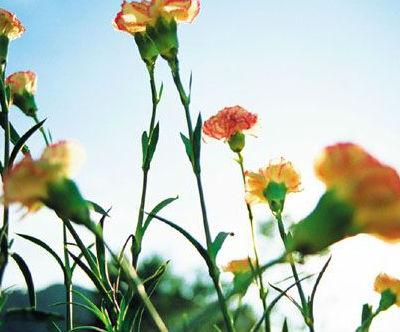 mas flores de verano para jardin de verano