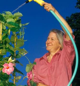 riego en verano exceso de riegoo en el jardin