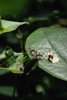 Jardinería Fácil »Hormigas, trucos para control de hormigas en el ...