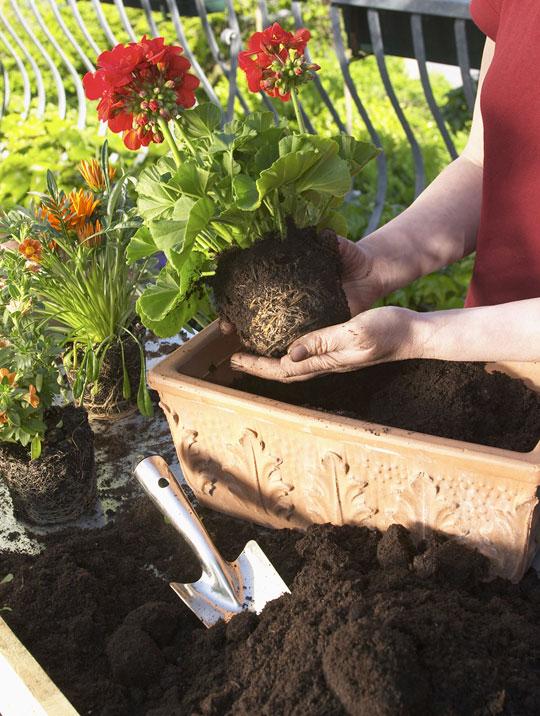 Reglas para la jardinería