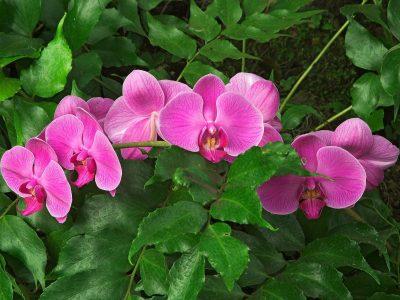 Jardiner a f cil orquideas 6 blog de jardiner a for Cuidados orquideas interior