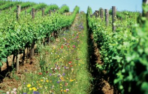 """Bases de la Agricultura Orgánica"""