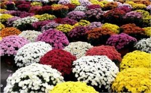 """""""Flores de Otoño"""""""