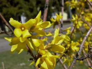 """""""Cultiva Plantas Resistentes a las Heladas"""""""