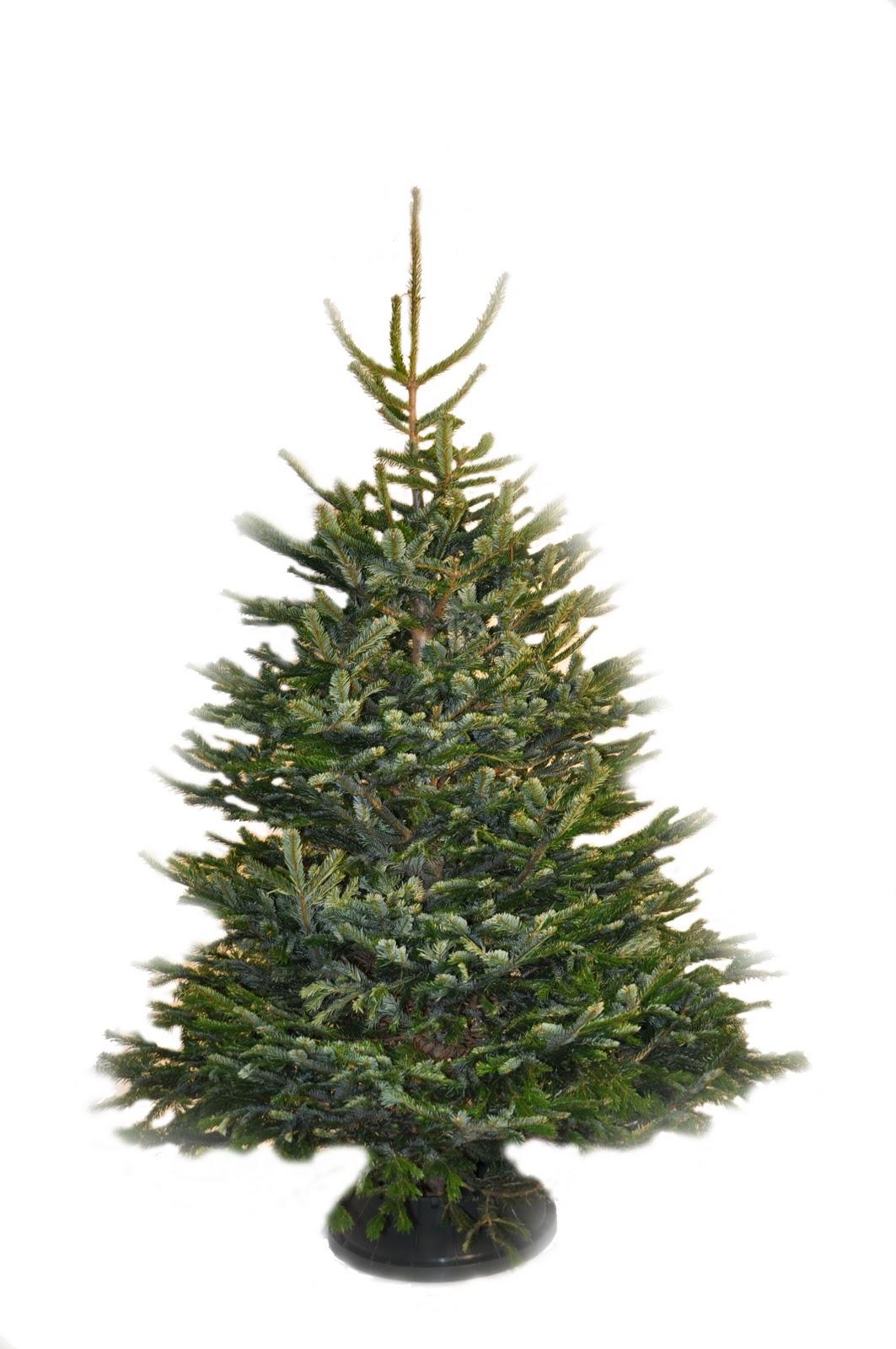 """""""Esta Navidad Opta por un Árbol Natural """""""