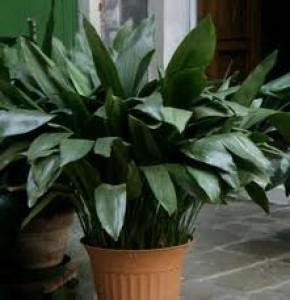 """""""Plantas de Interior con Poca Luz"""""""