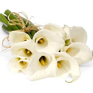 """ San Valentín: 7 Flores Perfectas para Regalar"""