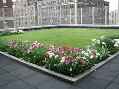 """""""¿No tienes Jardín? ¡Monta un Jardín en el Techo!"""""""