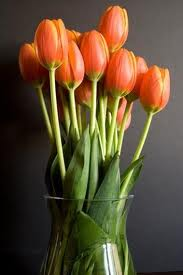 """Tulipanes, Cultivo Fácil"""