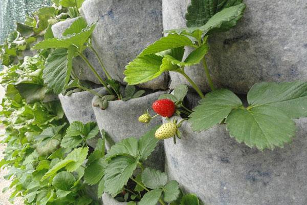 Jardiner a f cil huerto vertical 1 blog de jardiner a for Como se hace un jardin vertical