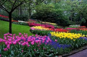 Los Cuidados del Jardín en Verano