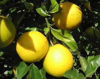 """""""Cuidar los Árboles Frutales en Verano"""""""
