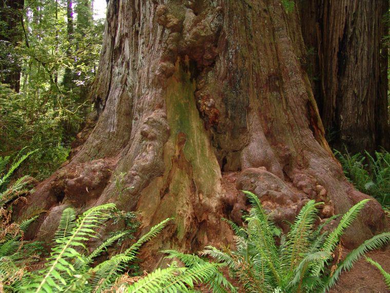 Jardiner a f cil gran tronco de arbol blog de jardiner a - Tronco de arbol para decoracion ...