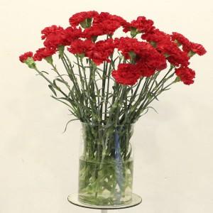 claveles-rojos