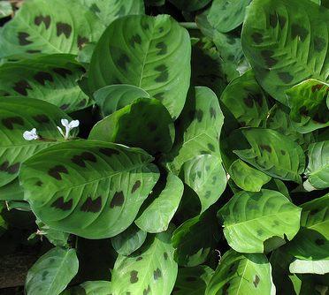 Jardiner a f cil qu plantas cultivar en un jard n vertical for Plantas de interior fotos y nombres